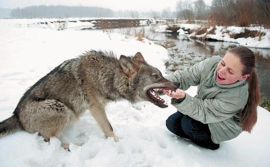 lobo y niña