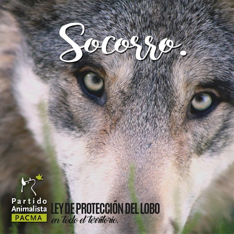 Pacma Ley de proteccion lobo