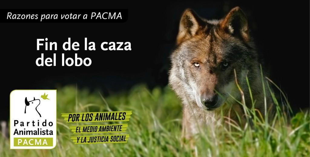 Pacma lobo fin de la caza